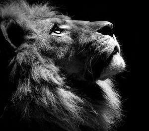 Гороскоп на 2020 год для Льва: карьера