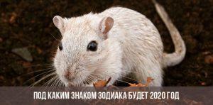 Чей год 2020 по восточному календарю и какого животного