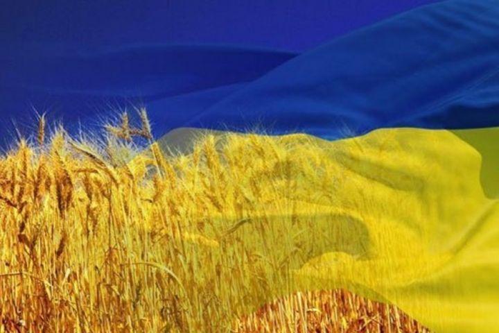 Пшеничное поле Украины