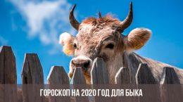Гороскоп на 2020 год для Быка