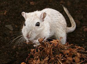 Гороскоп на 2020 год для Крыс женщин