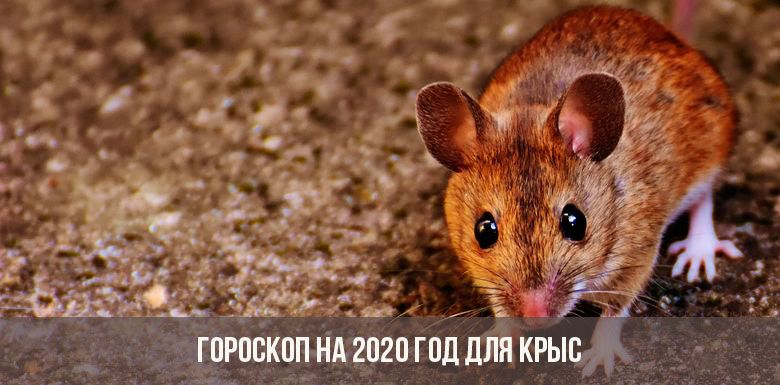Гороскоп на 2020 для Крысы