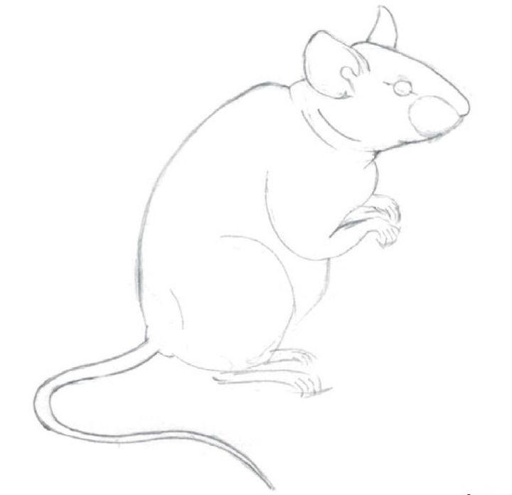 Картинки новогодних крыс карандашом