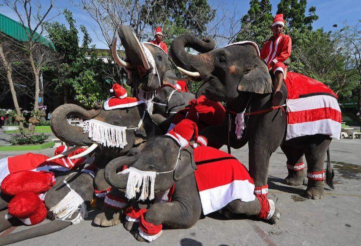 Слоны в новогодних одеждах