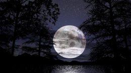 полная луна среди деревьев
