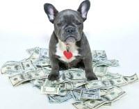 собака на долларах