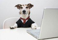 собака за ноутбуком