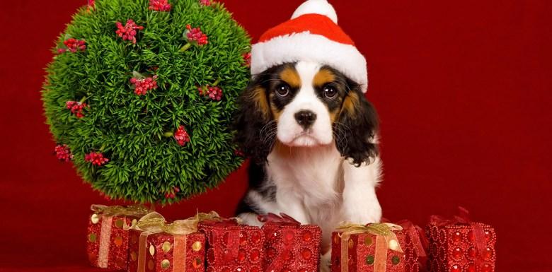 собака в красном колпаке среди подарков