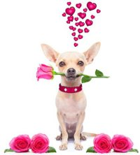 собака с розой и сердечками