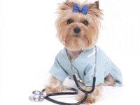 собака в медицинском костюме