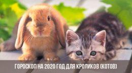 Гороскоп на 2020 год для Кроликов (Котов)