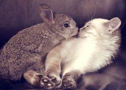 Любовный гороскоп на 2020 год для Кроликов (Котов)