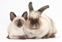 Финансовый гороскоп на 2020 год для Кроликов (Котов)