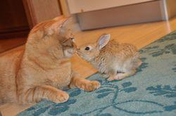 Гороскоп здоровья на 2020 год для Кроликов (Котов)