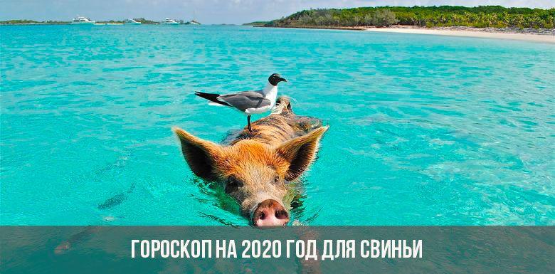 Гороскоп на 2020 год для Свиньи