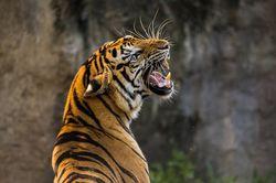 Гороскоп на 2020 год для Тигров мужчин