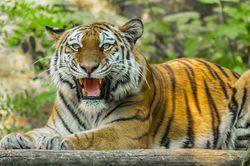 Гороскоп на 2020 год для Тигров