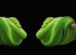 Любовный гороскоп на 2020 год для Змей