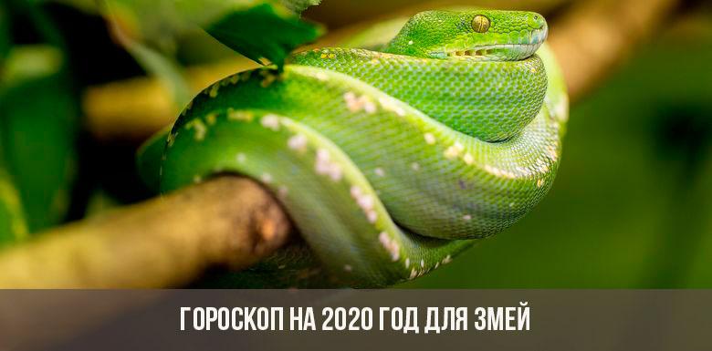 Гороскоп на 2020 год для Змей