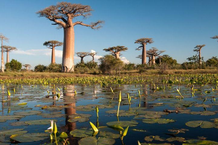 Новый 2020 год на Мадагаскаре