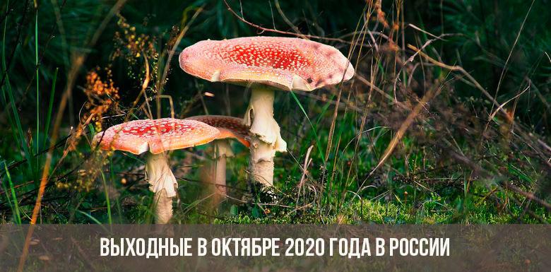 Выходные и праздники в октябре 2020 года