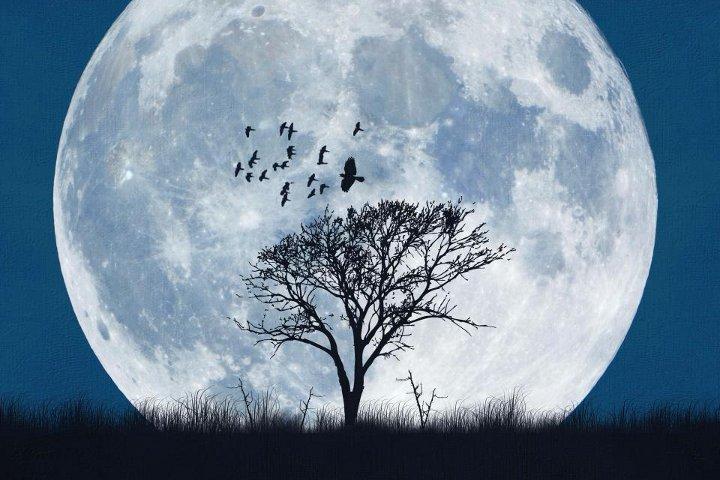 дерево на фоне полной луны