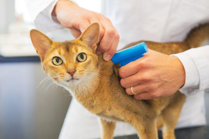 Чипизация кота