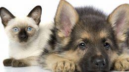 Налог на домашних животных в 2020 году
