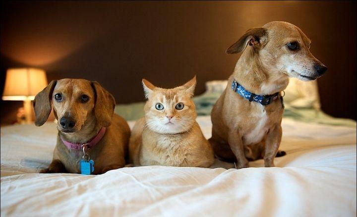 Кот и две собаки на кровати