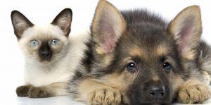 Когда введут налог на домашних животных в России? Сколько придется платить?