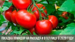 Посадка помидор на рассаду и в теплицу
