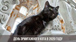 День эрмитажного кота в 2020 году