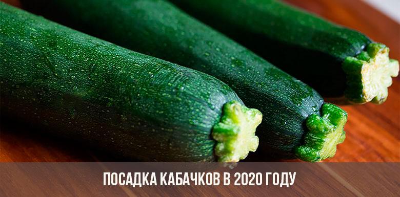 Посадка кабачков в 2020 году