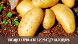Посадка картофеля в 2020 году: календарь