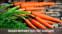 Посадка моркови в 2020 году