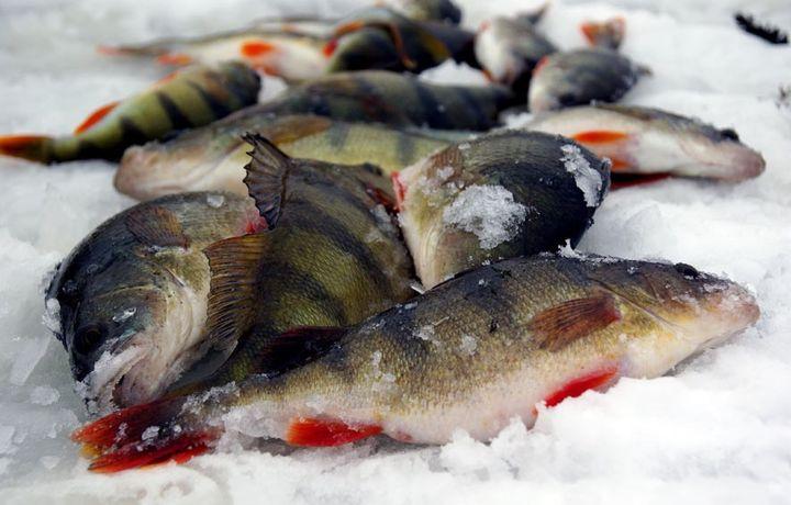 Зимняя рыбалка 2019-2020 года