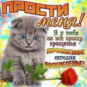 С Прощеным Воскресеньем открытка с котенком