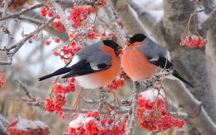 Народные приметы к холодной зиме