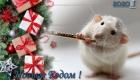 Новогодняя открытка с белой крыской на 2020 год