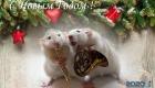 Крысы музыканты - открытка на 2020 год