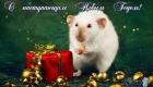 Пожелания на 2020 год Крысы