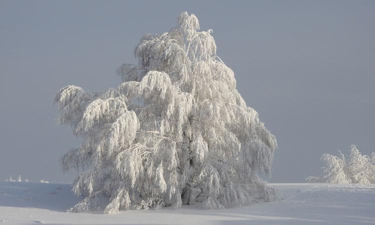 Долгосрочный зимний прогноз для Башкирии на 2020 год