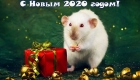 Открытки на 2020 год белой Крысы