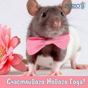 Открытка с нарядной крысой на Новый Год 2020