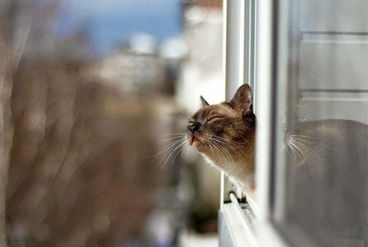 Кот выглядывает из окна