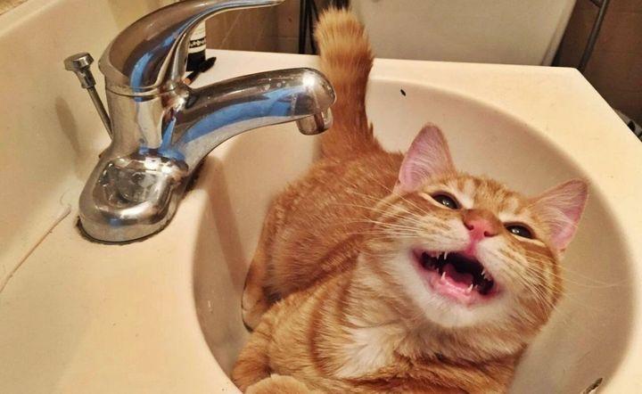 Рыжий кот лежит в раковине