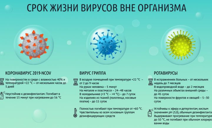 Срок жизни вирусов